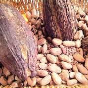 Cacao :Barry Callebaut veut être «responsable»