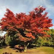 Des arbres rares vendus aux enchères