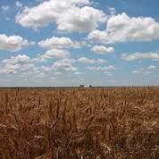 UE: l'euro faible dope les exportations de blé