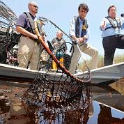 Marée noire chez les Indiens du bayou