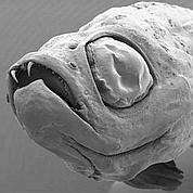 Le Top 10 des espèces découvertesen 2009