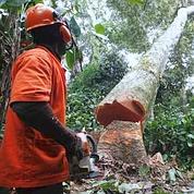 La gestion durable de la forêt congolaise