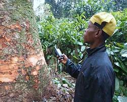 Les Pygmées munis de GPS ratissent la forêt. Ils envoient les informations qui sont immédiatement consignées sur les cartes qui serviront aux bûcherons