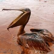 Marée : l'entonnoir posé par BP fonctionne