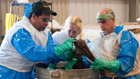 D'après les estimations des écologistes, plus de 10.000 volatiles  auraient péri depuis le début de marée noire.