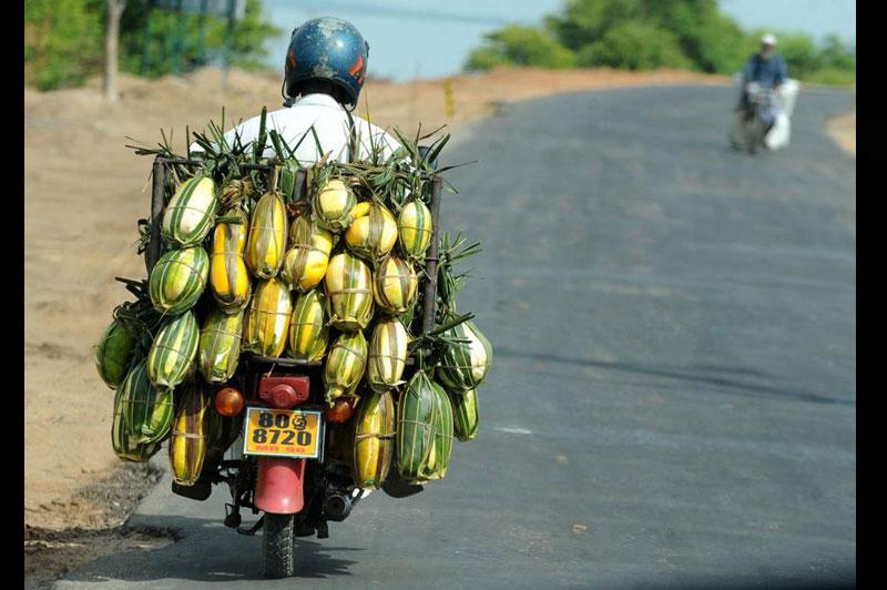 Lundi 5 juillet, dans la ville de Batticaloa, province orientale du Sri Lanka, ce fournisseur transporte sur son deux roues des concombres.