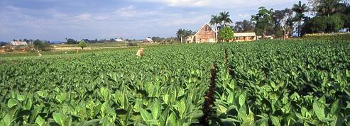 Des enfants produisent du tabac pour Philip Morris