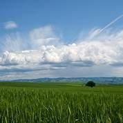La confiance revient sur les marchés agricoles
