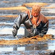 Terrible marée noire en Chine