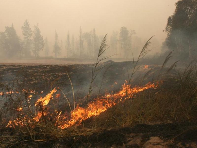 Les feux de forêt en Russie ont déjà tué 55 personnes 20100731PHOWWW00207