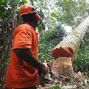 La lutte contre la déforestation avance