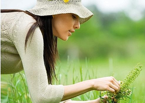 Herbiers de grands-mères et manuels d'herboristes deviennent, pour les laboratoires, une extraordinaire source de substances pour des médicaments de pointe.