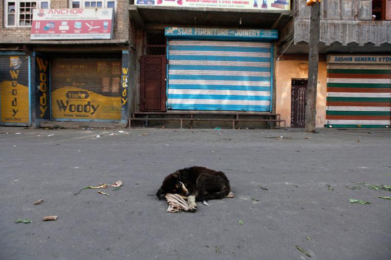 Dans les rues désertes de Srinagar, en Inde, un chien errant est couché devant des boutiques fermées. Les autorités ont établi un couvre feu. La région du Cachemire subit des insurrections séparatistes depuis deux mois.