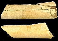 Deux os fossilisés d'animaux ayant 3,4 millions d'années.