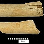 Lucy utilisait déjà des outils en pierre
