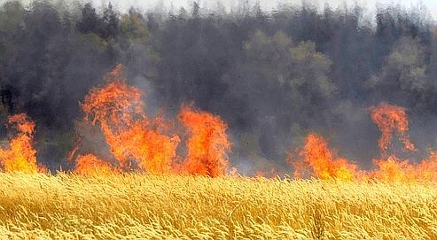 Un champs de blé en feu à Voronezh , à 500 kilomètres de Moscou.