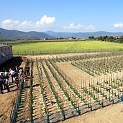 Des essais scientifiques d'OGM saccagés
