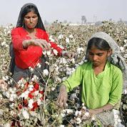 Le coton fait monter les prix du textile