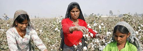 Le coton pousse à la hausse les prix du textile