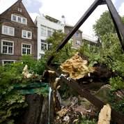 L'arbre d'Anne Frank abattu par le vent