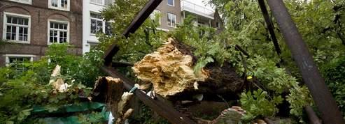 L'arbre d'Anne Frank abattu par le vent à Amsterdam<br/>