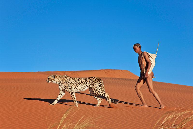 A chaque chasseur son animal : les Occidentaux utilisent le chien ou le faucon, les Kirghiz, l'aigle... les Bochimans, eux, ont leur guépard pour attraper gazelles ou antilopes. Ce félin, qui a un caractère suffisamment «doux» pour être domestiqué et dont les pointes de vitesse atteignent 110 km/h, est toujours un parfait accompagnateur pour ce peuple d'Afrique australe. Derniers représentants (avec les Pygmées) de la civilisation de la chasse à l'arc, les Bochimans ont su nouer une relation ancestrale avec les animaux qui les entourent. Marginalisée au Botswana, chassée de ses terres d'origine, cette ethnie nomade est en voie d'extinction. Comme son animal de chasse favori...