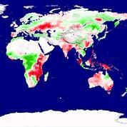 Les arbres ont du mal à capter le carbone