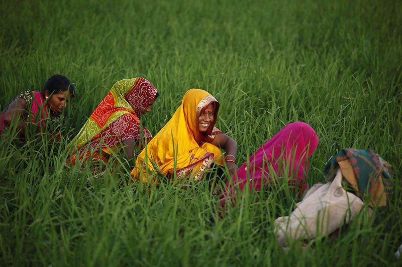 Sourire. Mardi 31 août, dans le village de Mauayma, près d'Allahabad, en Inde, des fermières travaillent dans une rizière alors que l'une d'entre elles nous offre un joli sourire !