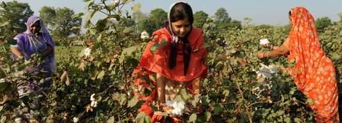 Le débat autour du coton OGM refait surface
