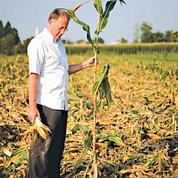 Bataille autour des OGM en Italie