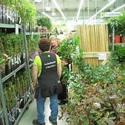 Garden Price, «le Lidl de la jardinerie»