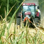 OGM : le maïs Mon810 au coeur du débat