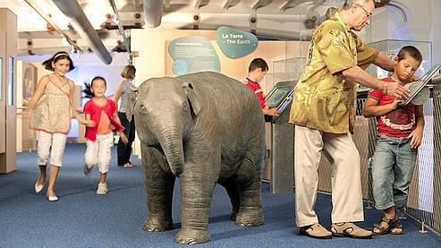 Une galerie écologique et sur mesure pour les 6-12 ans