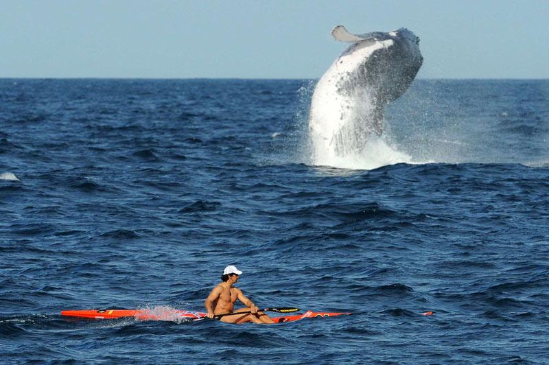 C'est une insolite rencontre qui s'est produite, mardi 28 septembre, près du port de Sydney, en Australie, entre cet homme et une baleine à bosse.