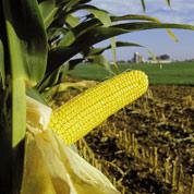 Des toxines d'OGM dans les rivières américaines