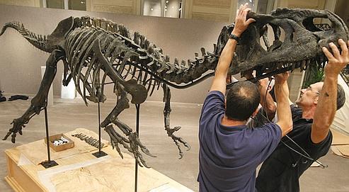 Assemblage du squelette chez Sotheby's, lundi à Paris.
