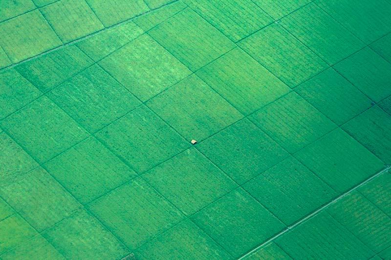 Samedi 16 octobre, près de Bandung, dans la partie occidentale de l'île de Java, en Indonésie, les rizières s'étendent à perte de vue. En plein milieu, un unique refuge.