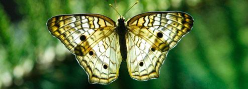 23.500milliards d'euros par an grâce à la biodiversité