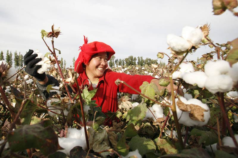 Cette femme récolte du coton dans un champ de la ville d'Hami, dans la province du Xinjiang, en Chine.