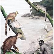 Nos lointains ancêtres viendraient d'Asie
