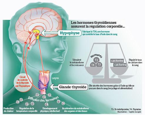 Une procédure de dépistage du cancer de la thyroïde.