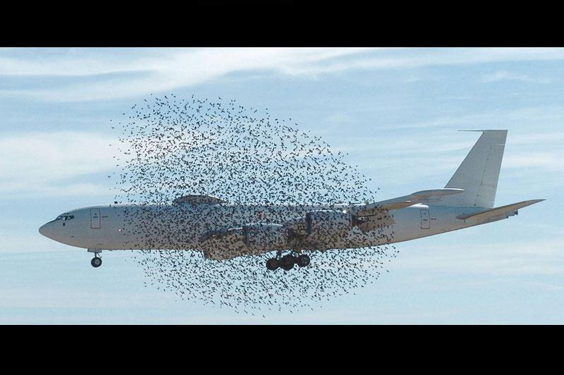 />PÉRIL AVIAIRE</b>. En plein exercice d'atterrissage et de décollage tactiques sur la base de Fort Smith, en Arkansas, cet avion de l'US Air Force a failli s'écraser quand un nuage d'oiseaux migrateurs s'est envolé à son approche. Un risque considéré comme majeur car les oiseaux peuvent être «avalés» par les réacteurs et provoquer une perte de puissance. Aux Etats-Unis, les collisions entre les avions et les oiseaux coûteraient 600 millions de dollars de dégâts par an. En France, 700 collisions avec des oiseaux sont enregistrées chaque année par l'aviation civile. A peu près 15 % d'entre elles sont classées « significatives», soit potentiellement dangereuses pour la sécurité aérienne.   &nbsp;&raquo; height=&nbsp;&raquo;480&Prime; width=&nbsp;&raquo;741&Prime; /></p> <p><font face=