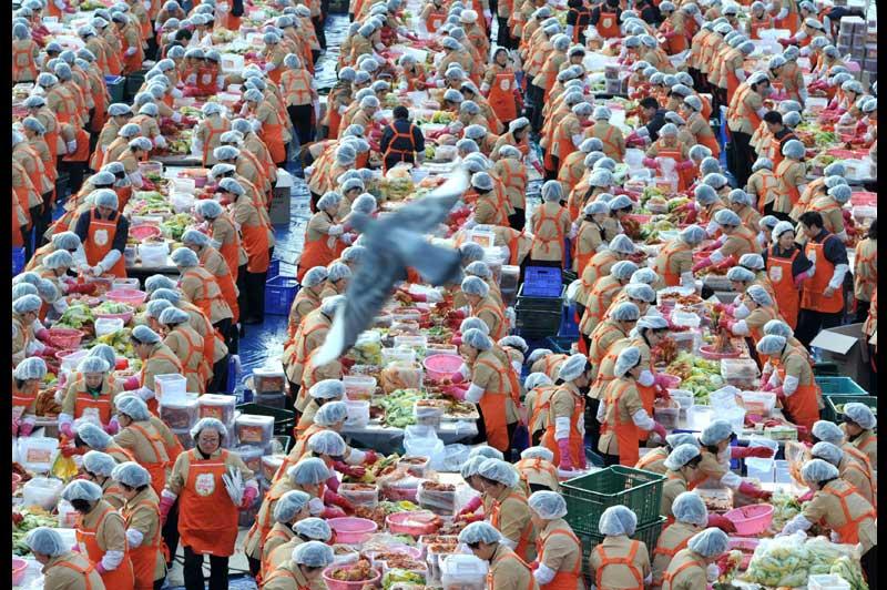 Mardi 16 novembre, à Séoul, plus de 2000 personnes se sont retrouvées pour préparer du kimchi, un mets traditionnel coréen composé de piments et de légumes fermentés, à base de chou chinois. Le tout sera ensuite distribué gratuitement aux plus pauvres.