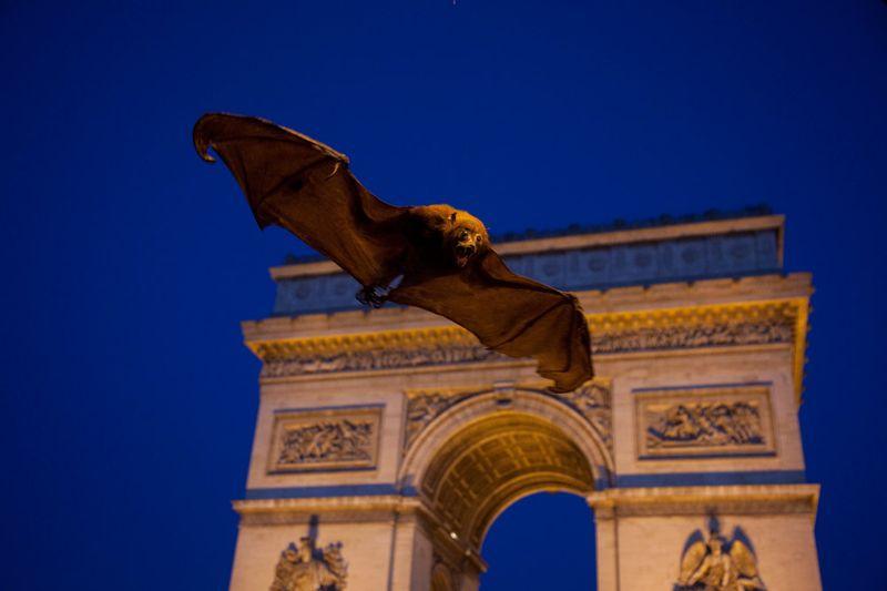 La Chauve-souris devant l'Arc de Triomphe