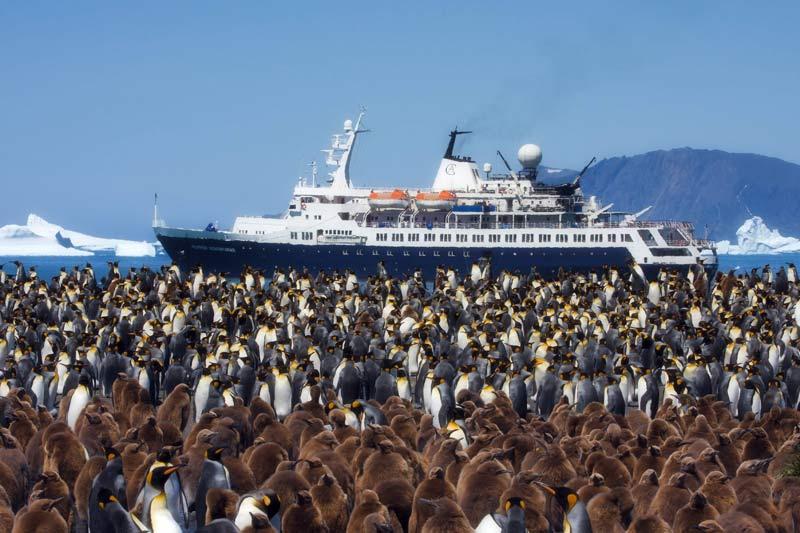 Lundi 30 novembre, des milliers de manchots regardent passer un bateau de croisière qui sillonne les mers entre les îles Falklands, la Géorgie du Sud et la péninsule Antarctique.