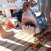 Égypte : des touristes mutilés par des requins