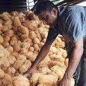 Oignon, coco : flambée des prix en Asie