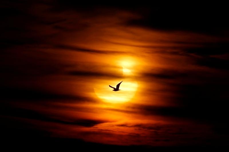 Une mouette passe devant le soleil levant partiellement masqué par la lune sur la plage de Guadalmar à Malaga, en Espagne.