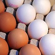 Pas d'œufs à la dioxine en France