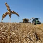 États-Unis: les stocks de maïs et de soja baissent
